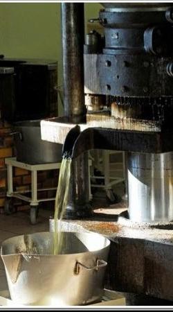 pressage de l'huile de noix à l'Huilerie Lépine