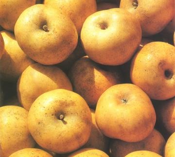 pommes reinette Clochard bien mûres
